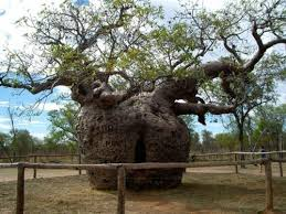 10 amazingly unique trees to see newsnish