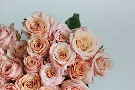 elegance rose shimmer a perfect blend of elegance and durability the