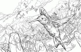 hummingbird coloring pages coloring pages for all ages