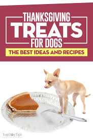 the 10 best thanksgiving treats for dogs to spoil your fido this