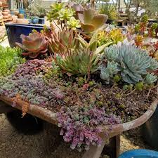 Succulent Gardens Ideas 26 Best Succulent Garden Ideas Around The World Succulent