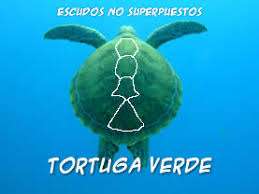 imagenes tortugas verdes tortugas marinas vida marina en playa del carmen mexico