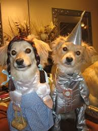 Halloween Costume Ideas For Pets 81 Best Halloween Costumes For Pets Images On Pinterest Pet