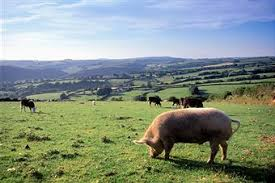 Backyard Pig Five Tips On How To Pig Farm That Will Help You In Keeping Healthy
