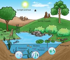 what is the difference between organism population community