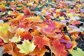 imagenes de otoño para fondo de escritorio paisajes de otoño para fondo de pantalla buscar con google hojas