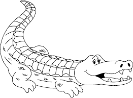drawn alligator outline pencil and in color drawn alligator outline