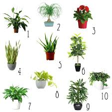best light for plants best inside plants elegant top indoor plants low light plants indoor