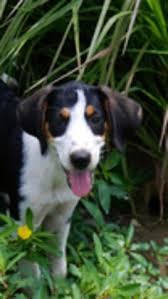bluetick coonhound owners pinterest u2022 the world u0027s catalog of ideas