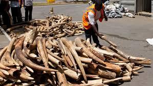 massive zimbabwe elephant u0027s killing legal but right cnn
