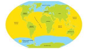 Florida Shark Attack Map Great White Shark Smithsonian Ocean Portal Great White Sharks May