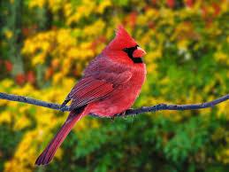 السمآء كثري طيور تجميعي