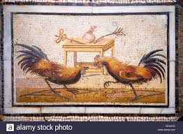 roman mosaic portrait of a cockerel fight from pompei
