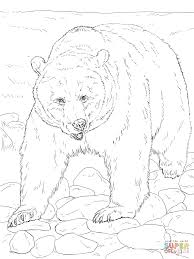 grizzly bears coloring pages alaskan bear face page animal large
