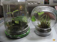 50 mini terrarium party favors by terrariumshop on etsy