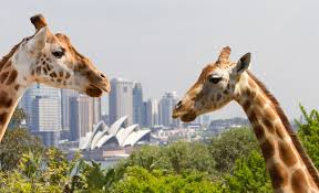 five other things to do on christmas day in sydney concrete