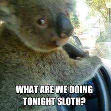 driving koala and rape sloth pinky and the brain album on imgur