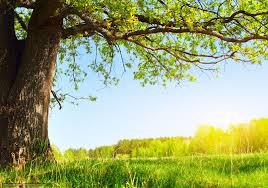 download wallpaper summer sun nature tree free desktop