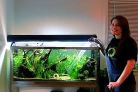 cuisine interior modern fish tanks aquarium design group custom