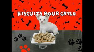 comment cuisiner du chien comment faire des biscuit pour chien 29 cuisiner maison