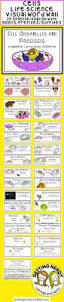 best 25 teaching biology ideas on pinterest science cells