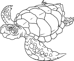 turtle preschool coloring pages zoo animals animal coloring 6657