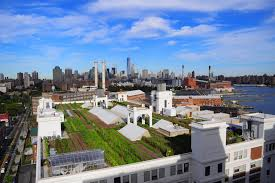 best rooftop gardens and urban farms in nyc including gallow green