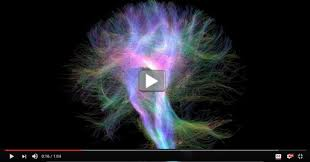 cool starring the wiring diagram of the human brain nih