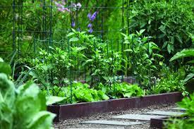 chopchop goes inside the white house kitchen garden garden