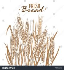 ripe rye ears corn field leaves stock vector 445375864 shutterstock