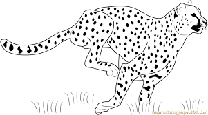 cheetah color page african cheetah coloring page free printable