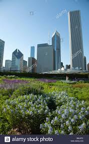 native plants in illinois chicago illinois native prairie plants blooming in lurie garden in