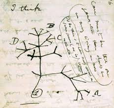 charles darwin and evolution genetic science uproots the tree of