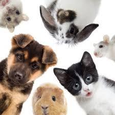 cats afterpains spurios labour dr len kliman