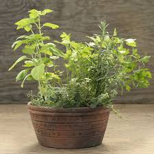 Indoor Herb Garden Kit Indoor Herb Gardens Make Wonderful Housewarming Gifts The