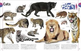 the animal book dk 9781465414571 amazon com books