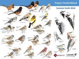 Ontario Backyard Birds Identifying Birds Feederwatch
