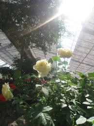 european herb garden iwami travel guide an english guide to