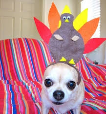 dogs dressed as turkeys 11 pictures