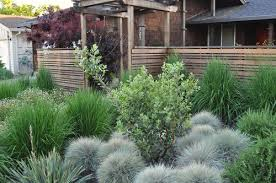 what type of ornamental grass is surrounding the middle tree the