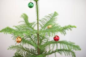 photo of pine tree with decorations free