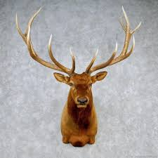 taxidermy home decor rocky mountain elk mount 12606 the taxidermy store