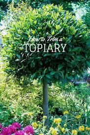 nurseries in atlanta homewood nursery 87 best topiary images on pinterest topiaries boxwood garden