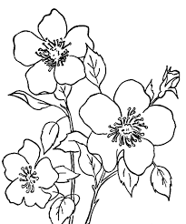 image gallery flower drawings kids colour