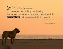 grieving loss of pet pet loss quotes to help you through grief of losing your dog