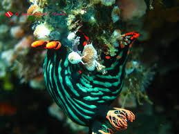 sonofareef scuba diving in romblon