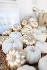 Where To Buy Fall Decorations - best 25 white pumpkin decor ideas on pinterest rustic
