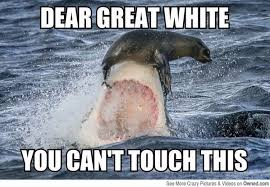 Can I Touch It Meme - dear great white you can t touch this funny shark meme image