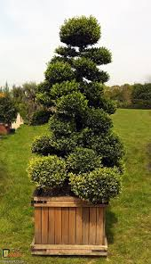 Topiary Cloud Trees - buxus archives bespoke topiary plant sculptures
