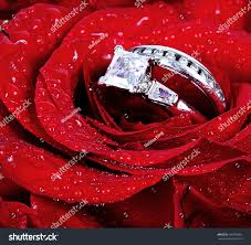 red rose rings images Set wedding rings red rose taken stock photo edit now 130793681 jpg